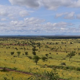 "...the name, Serengeti, comes from the Maasai, meaning ""endless plains""."