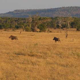 …drive through the wide open plains, miombo woodland and along the many lake shores.