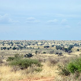 The Kgalagadi is barren and beautiful landscape...