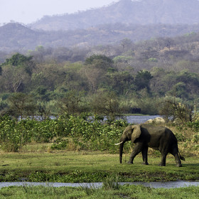 Majete is fast becoming Malawi's most interesting wildlife reserve.