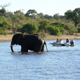 Elephants cross to and from Botswana, as can visitors to Namibia.