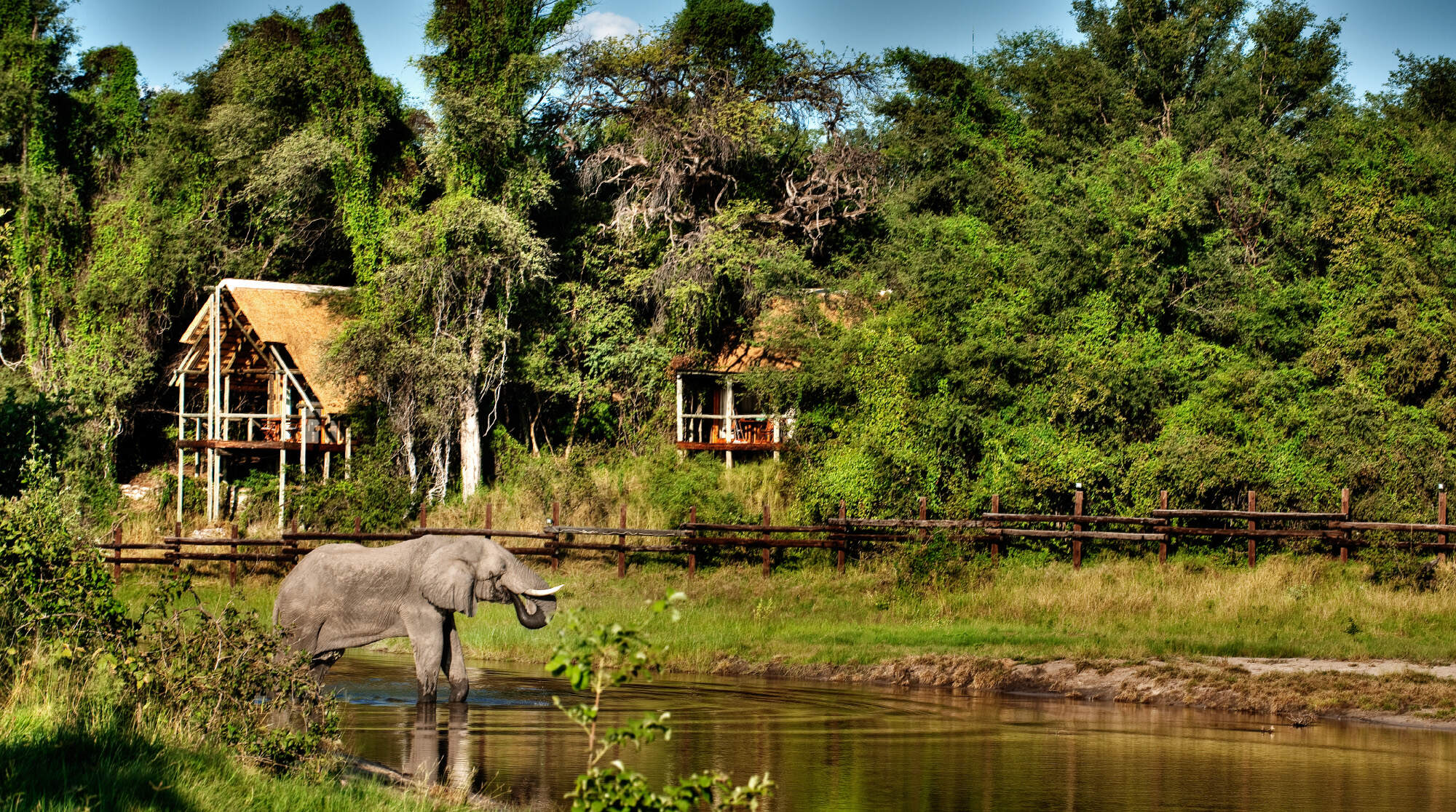Savute Safari Lodge| Botswana luxury Safari