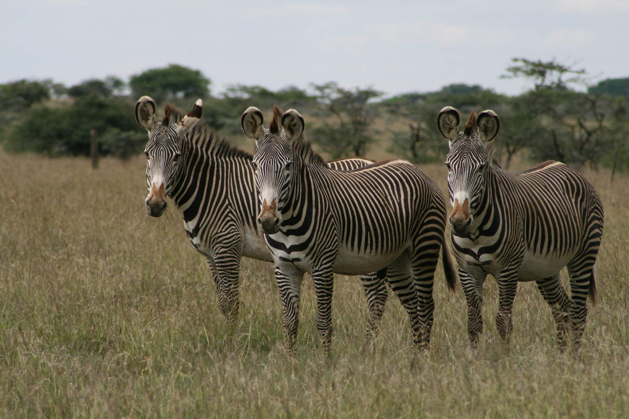 Laikipia | Kenya | Expert Africa