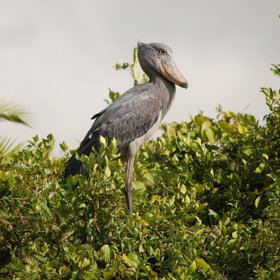 With its largely undisturbed habitats, Zambia is superb for bird-watching.