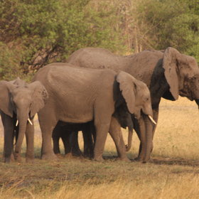 You will also find one of the largest populations of elephants in Africa.