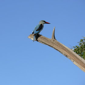 And with around 550 recorded species, Botswana is a superb birding destination.