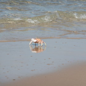 The beaches can be great for walking, and often your only company will be crabs...