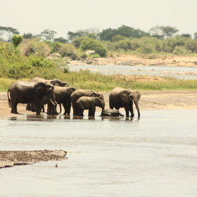 with good numbers of elephant.