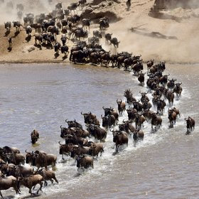 ...where you can experience the famous wildebeest migration...