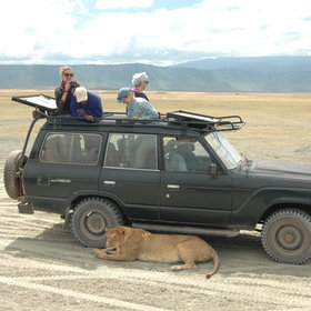 Take game drives in open-topped vehicles...
