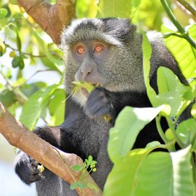 You will come across interesting primates in Tanzania…
