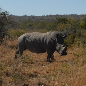 Zambia's Mosi Oa Tunya National Park is home to a small population of white rhino.