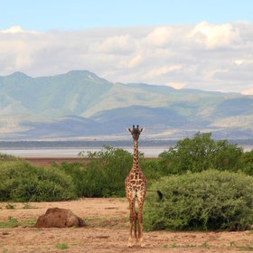 Lake Manyara Safari