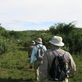 Walk with an experienced guide and ranger, looking out for fauna as you go.