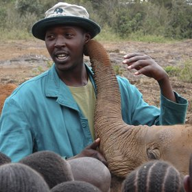 The DSWT Elephant Orphanage is a highlight for many people visiting the city.