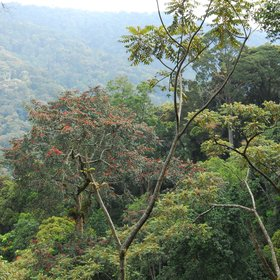 Bird Walk in Nyungwe Forest