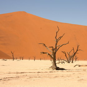 Explore the iconic apricot dunes of Sossusvlei...