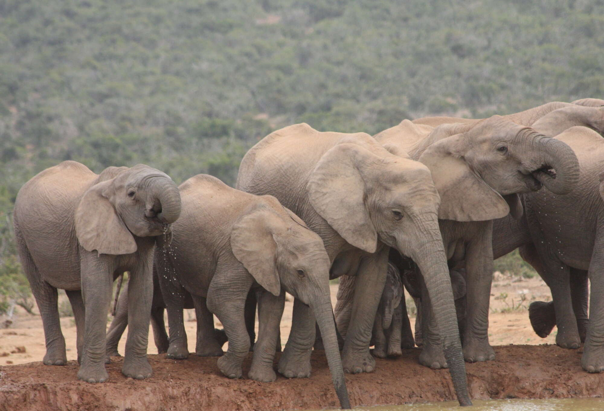 Addo Self-drive Safari – Addo Elephant Park – Eastern Cape – South Africa