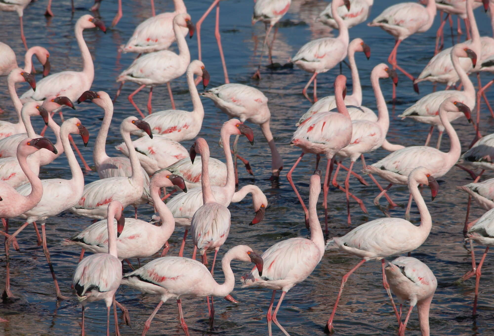 Flamingo fly-in safari to Namibia including, Sossusvlei, Etosha National Park and Okonjima – the AfriCat Foundation.