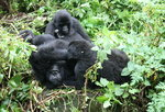 Luxury Gorillas and Serengeti