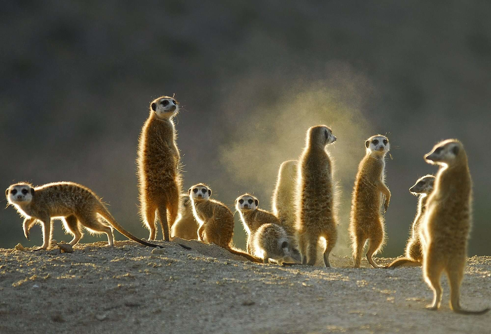Meerkat Self-drive Safari – Cape - including Kgalagadi Transfrontier Park, and Augrabies Falls National Park.