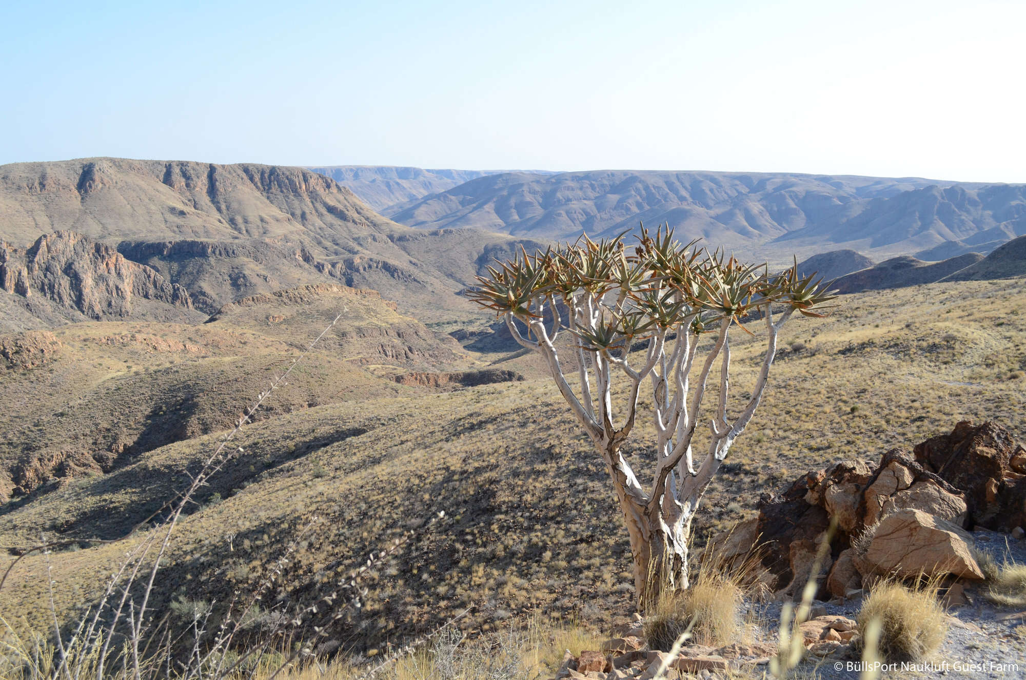Quiver Tree Self-drive Safari | Namibia | Expert Africa