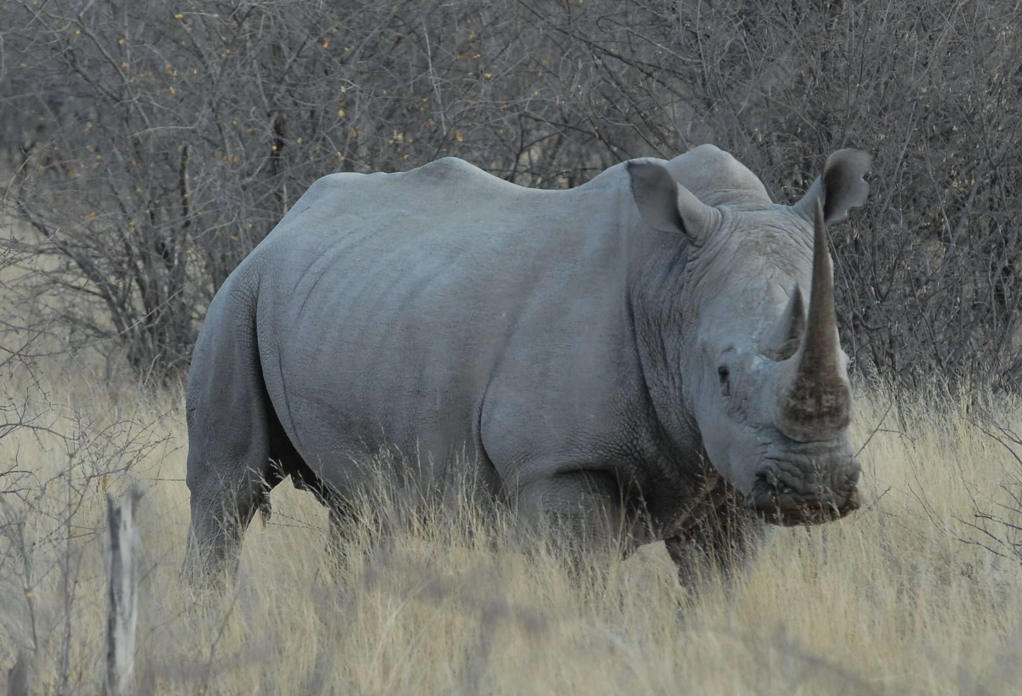 Self-drive holiday through Namibia, including tracking desert-adapted rhino on the Palmwag Reserve, walking in the Mundulea Reserve and wildlife viewing in Etosha National Park.