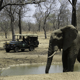 Go on wildlife safaris during day...