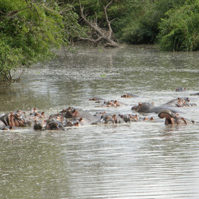 ...where there is usually a hippo pod in residence.
