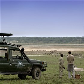 The activities at Serengeti under Canvas concentrate on game drives with very experienced guides.