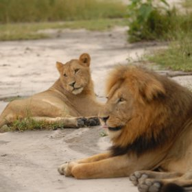 On our last trip here we saw two huge prides of lion...