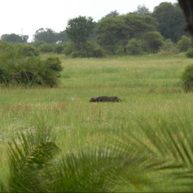 ...and buffalo right in front of the camp.