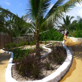 You walk through the tropical garden to get to the various facilities of the lodge.