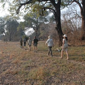 Crocodile Bushcamp is all about walking safaris…