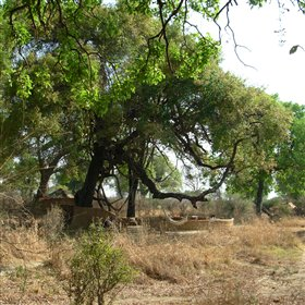 Mwamba Bushcamp is a small, traditional camp in the bush of South Luangwa.