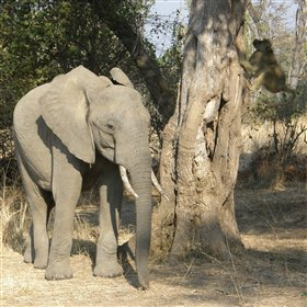 Safari drives take you into a wildlife rich area of South Luangwa National Park.