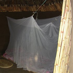 ... covered by a mosquito net.