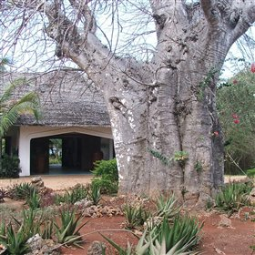 Tucked away behind an enormous baobab tree is the entrance to Fumba.