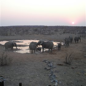 ...attracting black rhino and herds of elephant.