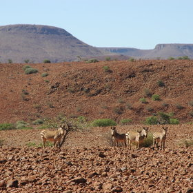 ...the varied fauna including the Hartmanns Mountain Zebra...