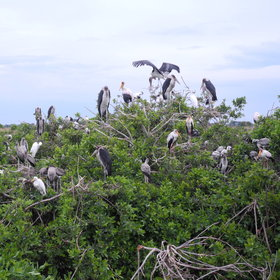 ...and of the heronry which attracts an array of nesting birds between August and December.