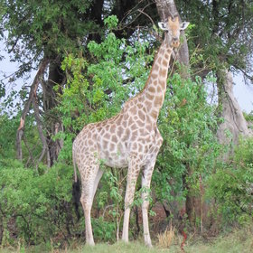 Sightings include giraffe, elephant, lion, antelope, leopard, spotted hyena, zebra and buffalo.