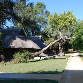 Accomodation at Mfuwe consists of 18 chalets.