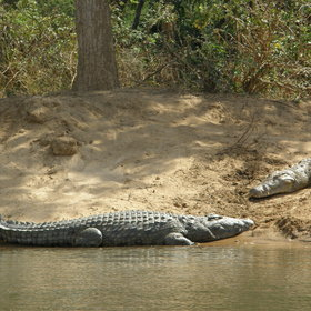 ... whilst you might see some crocodiles...