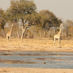...which are really varied in this area of Hwange.