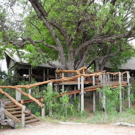 The main area at <b>Tubu Tree Camp</b> is raised on wooden decking.