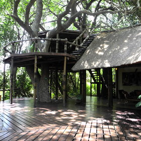 A multi-level deck is built around shady mangosteen and leadwood trees...