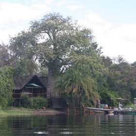 The lodge is situated on Impalila Island and is built around a 800 year old baobab tree.