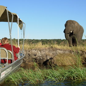 End your day with a game viewing cruise along the banks of the Chobe National Park.