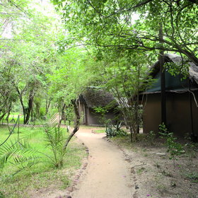 Stroll along the lush, green walkway to reach your tent.